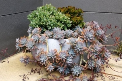 Succulents-at-The-Loft-Noosa-Sound