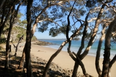 Tea-Tree-Bay-in-the-Noosa-National-Park