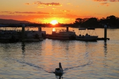 Pelican-at-sunset-in-Noosaville